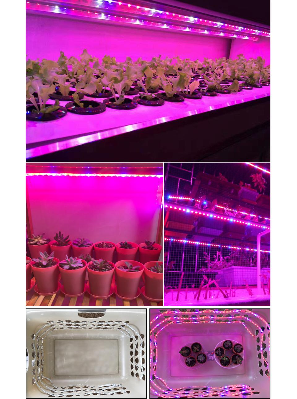 LED_Grow_light_Full_3